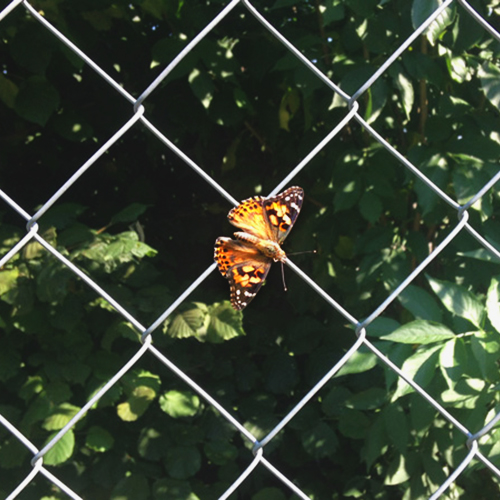 Schmetterlinge züchten in der Schule