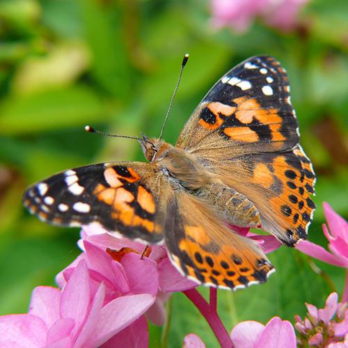 Schmetterling Projekt